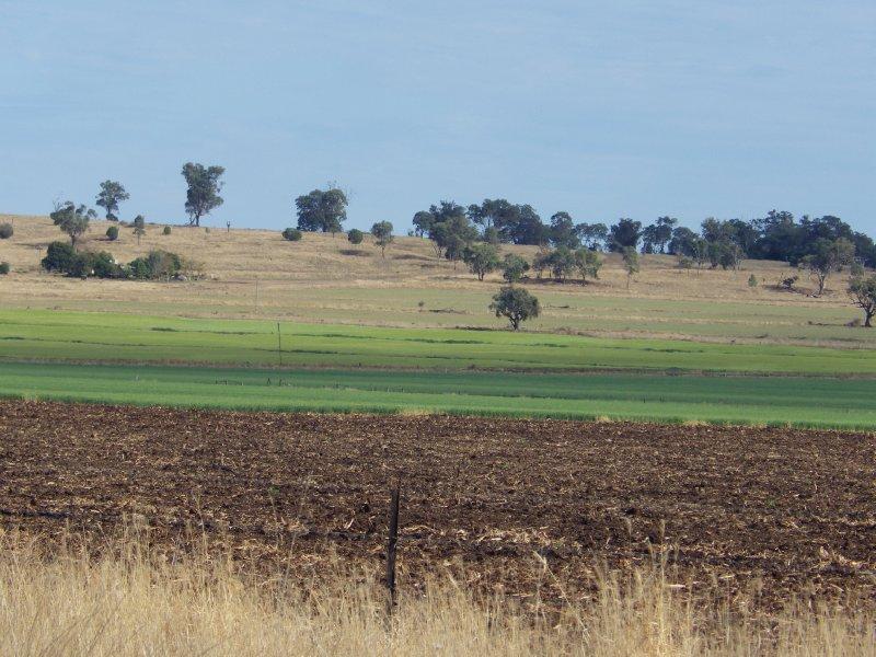 2013 Sep 15 Darling Downs Grain 3