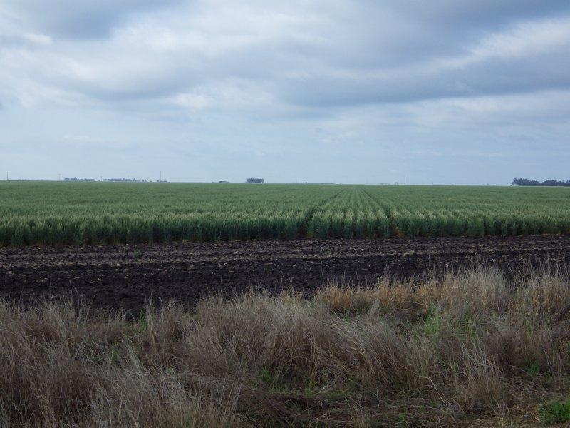 2013 Sep 17 Wheat Field