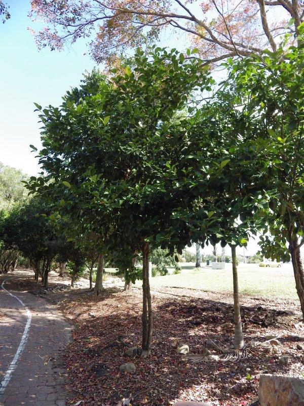 2013 Sep 9 White Fruit Tree Kershaw gardens