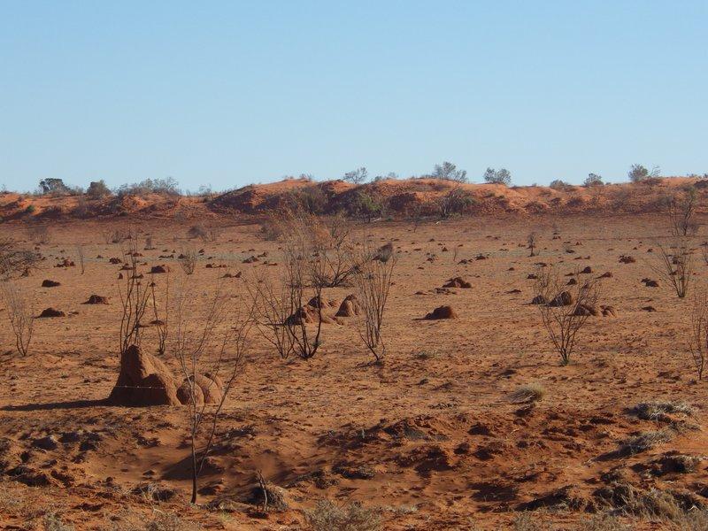 Red sand Hill near Windorah