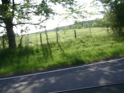 Louisiana_drive_005.jpg