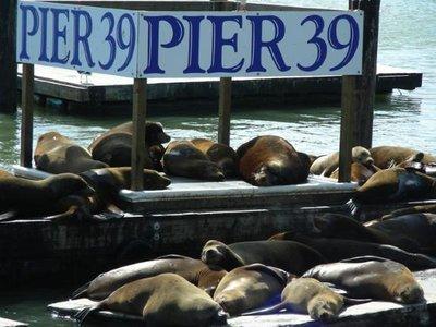 San_Franci..pier-39.jpg