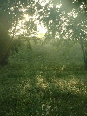 Texas_Loui..ppi_442.jpg