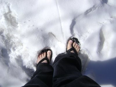 flips___snow_.jpg
