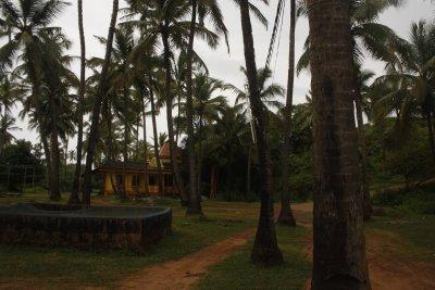 29.0. Near Mandrem North Goa