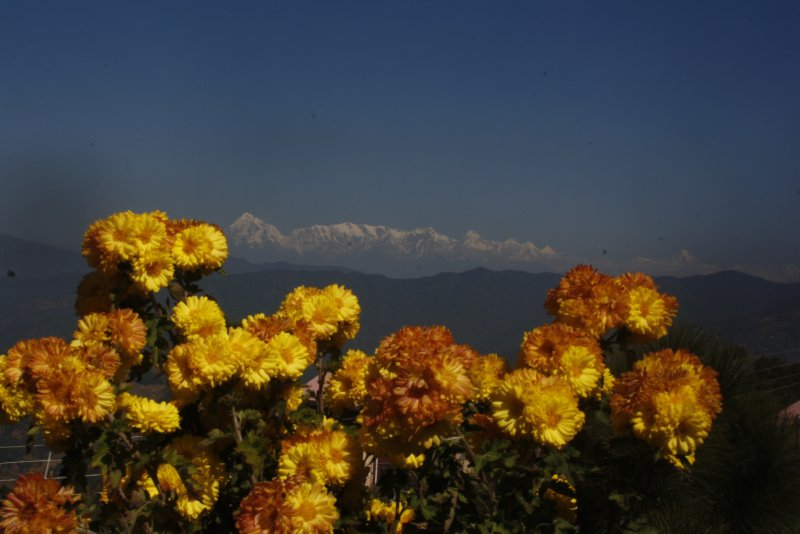 large_3_3_View_f.._-_Ranikhet.jpg