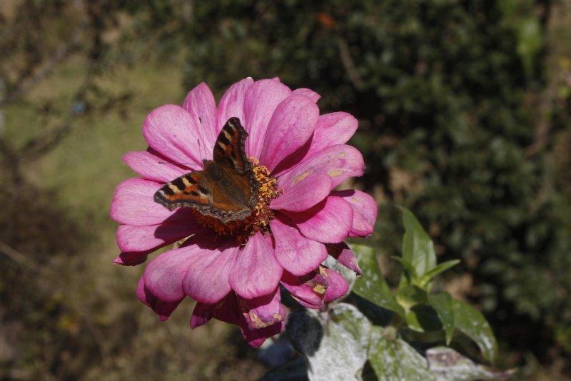 large_3_4_Butterfly.jpg