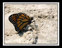 Butterfly_3463.jpg