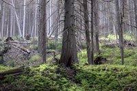 trees0306.jpg