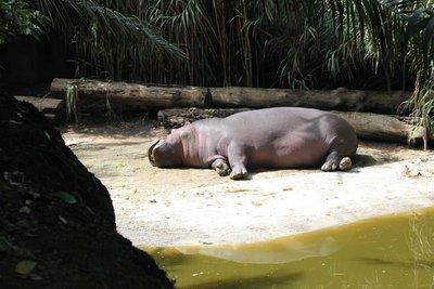 IMG_2988_-_Hippo.jpg