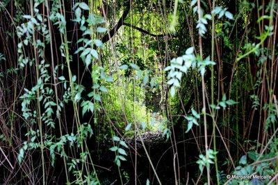 IMG_3341_-_Jungle.jpg