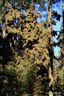 IMG_5330_-_Laden_tree.jpg