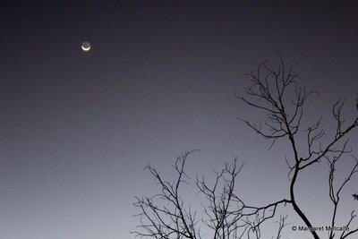 IMG_5397_-_Moon.jpg