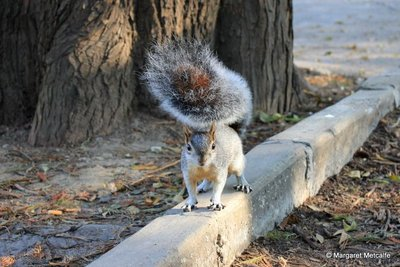 IMG_8051_-_Squirrel.jpg