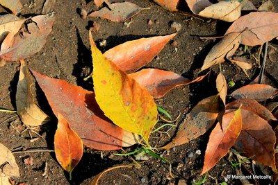 IMG_8177-1.._leaves.jpg