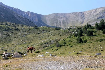 Horse high in the mountains