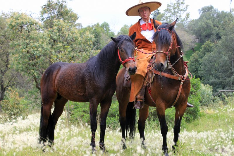 Mexican charro with his horses