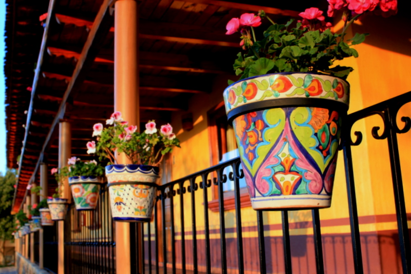 Row of colourful flowerpots