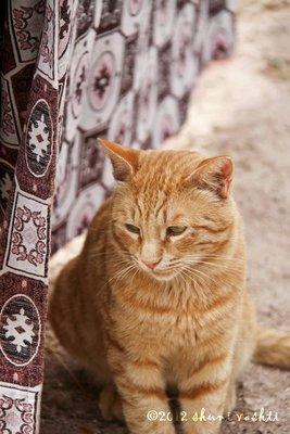 Cappadocia_1resized.jpg