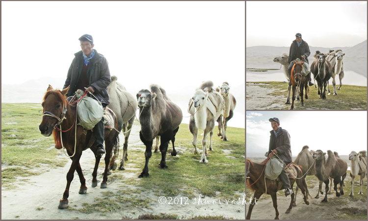 large_Camel_Collagesresized.jpg