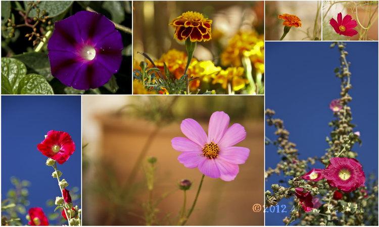 large_Flowersresized.jpg