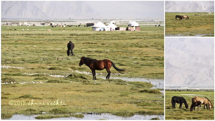 Horse Feeding Ground