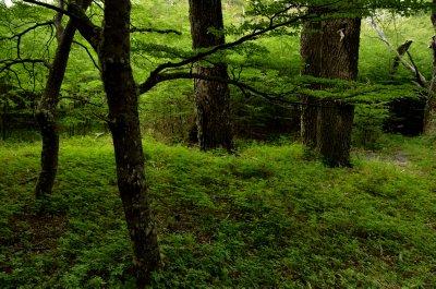 Green Forest Scene