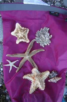A Collection of Dried Sea Stars