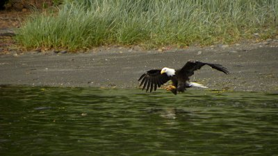 eagle_catch.jpg