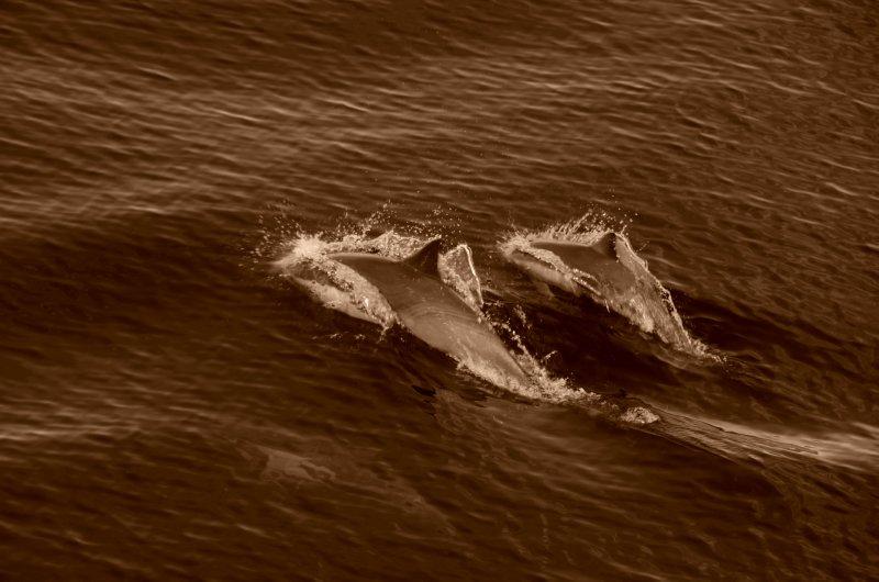 Dolphin Breath