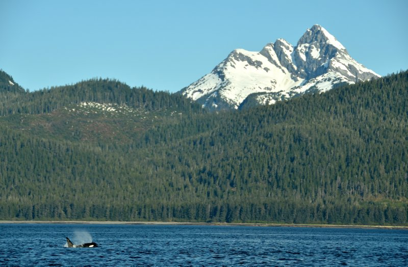 Orca and Mountain Landscape