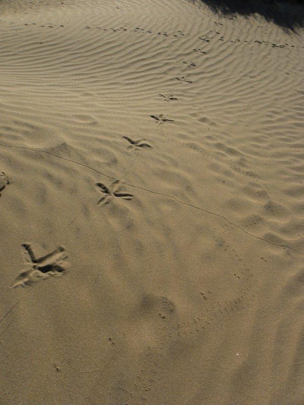 Desert Animal Meeting Ground