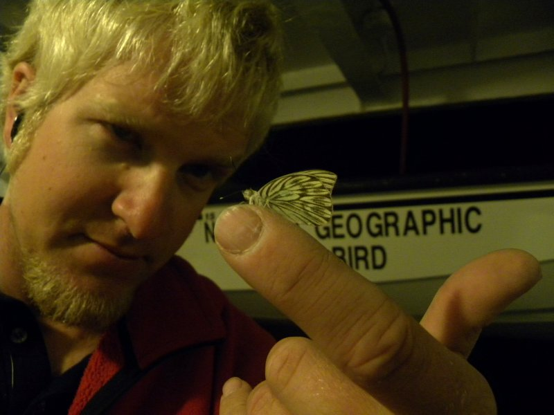 A moth found at 4 am