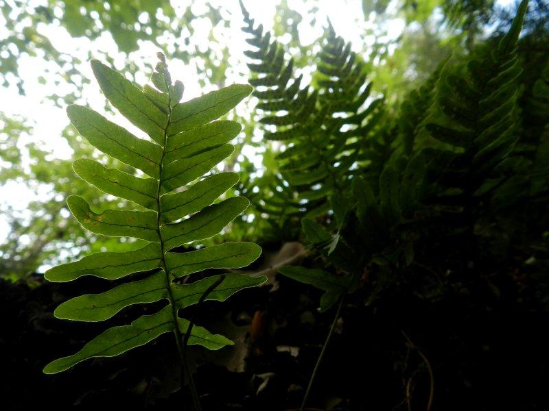 Forest Vegetation Detail