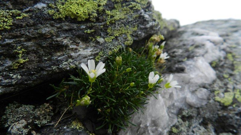 Delicate Arctic Flora atop Mansfield