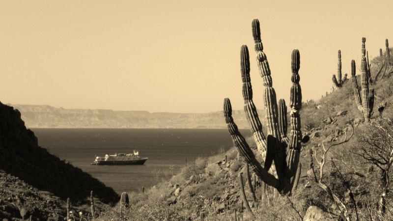 Desert Ocean Scene