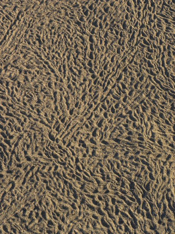 Desert Foot Prints