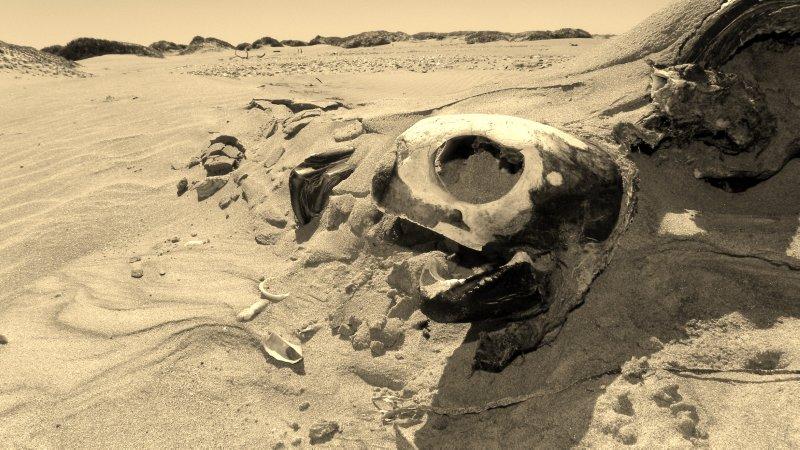 Turtle Skull Detail