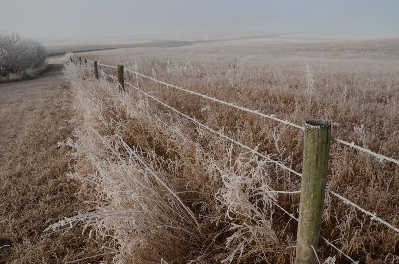 Fenceline in Fog