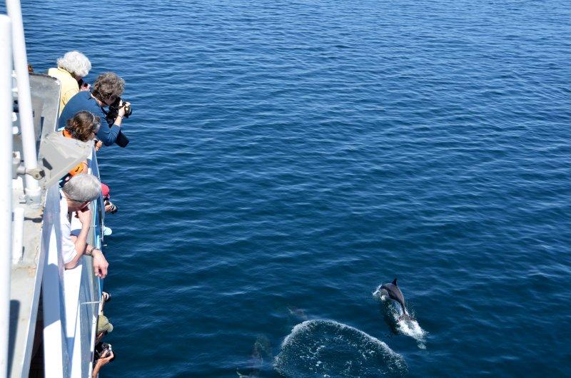 Crowd Pleasing Dolphin