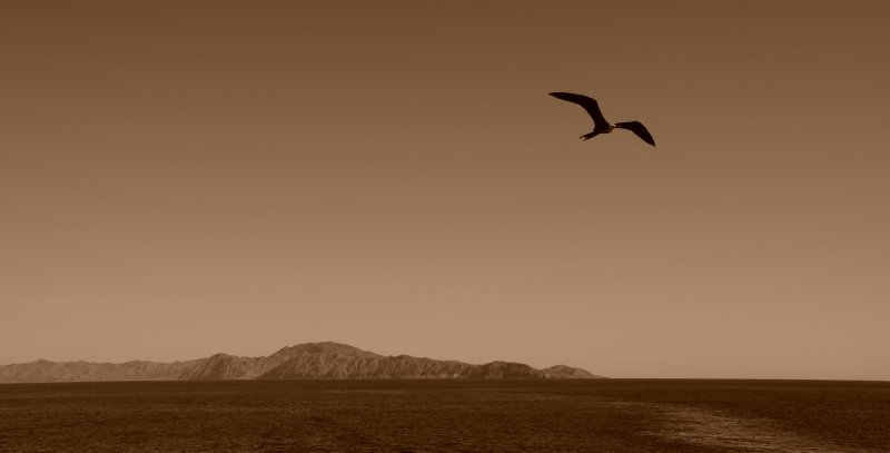 Frigate in Flight