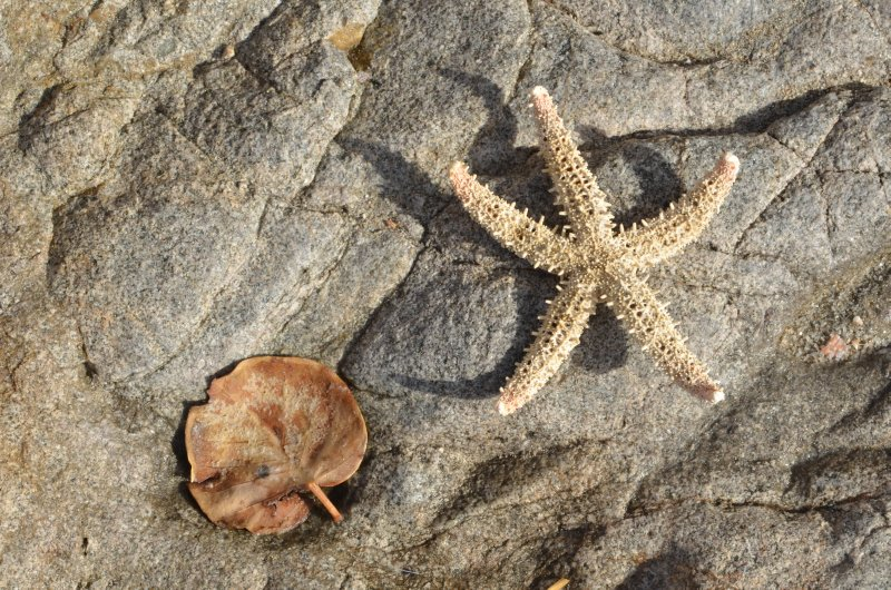 Starfish and leaf