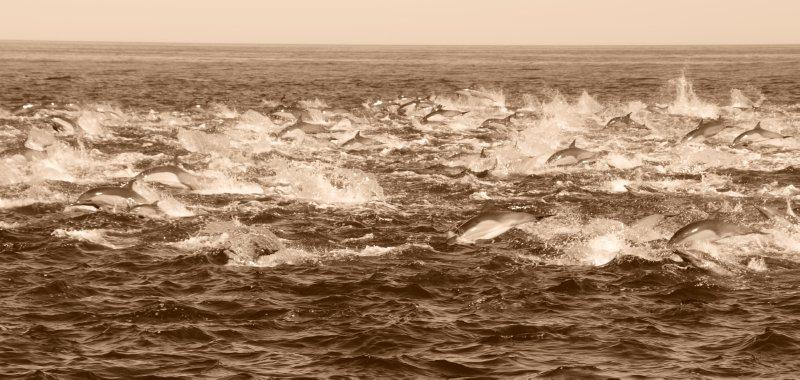 Dolphin Surge
