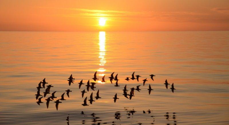 Circling Birds at Dawn