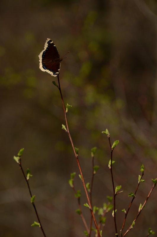 Flutterby Perch