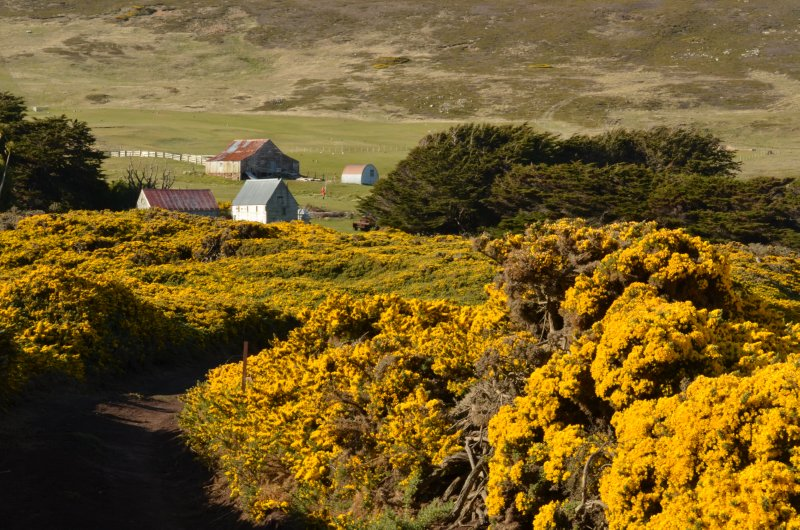 A Gorse Thicket