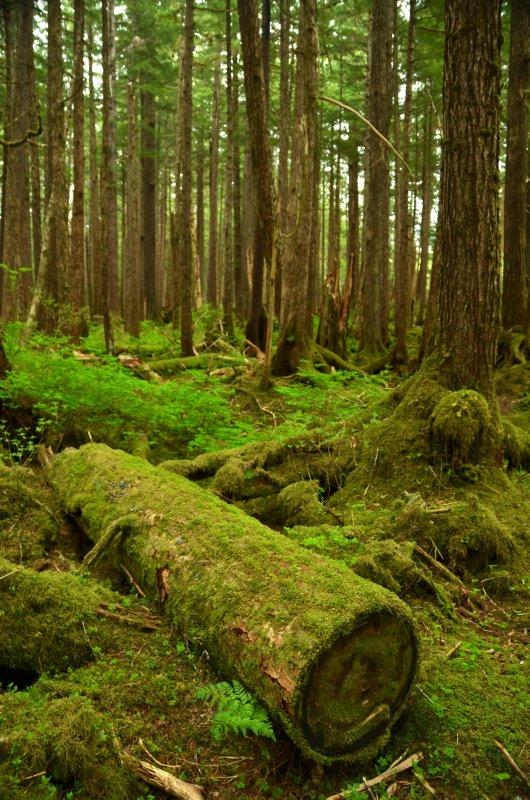 Green Forest Undergrowth
