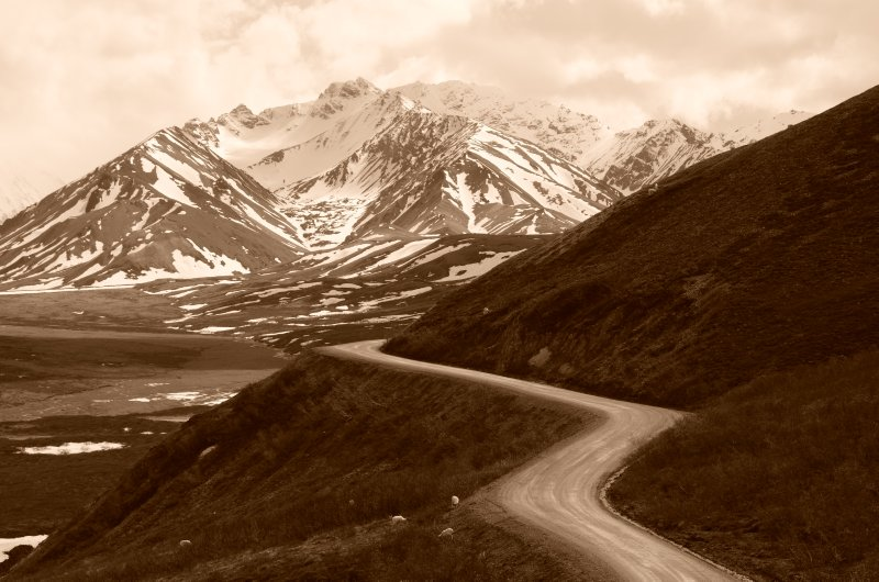 The Denali Park Road
