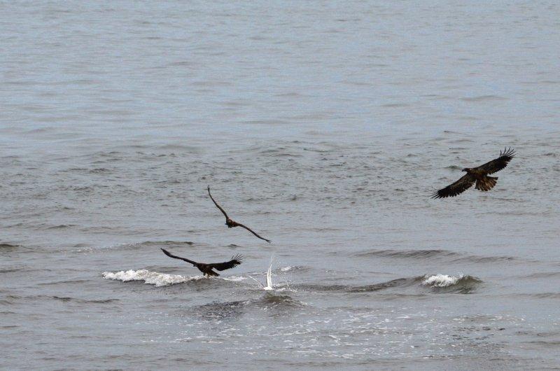 Eagle and Gull 6