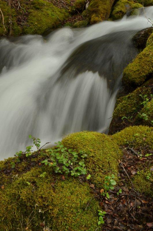 Silky Water, Green Moss